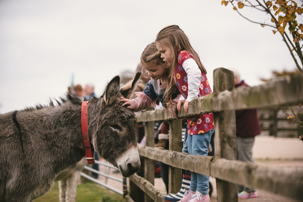 'We actively encourage people to come and cuddle the donkeys'. Image by Matt Austin for The Donkey Sanctuary