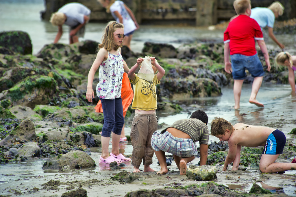 Kids will literally spend all day rock-pooling once they get going.
