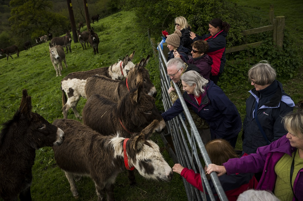J'Quality time volunteers' get close and personal with the donkeys. Image: Matt Austin for The Donkey Sanctuary