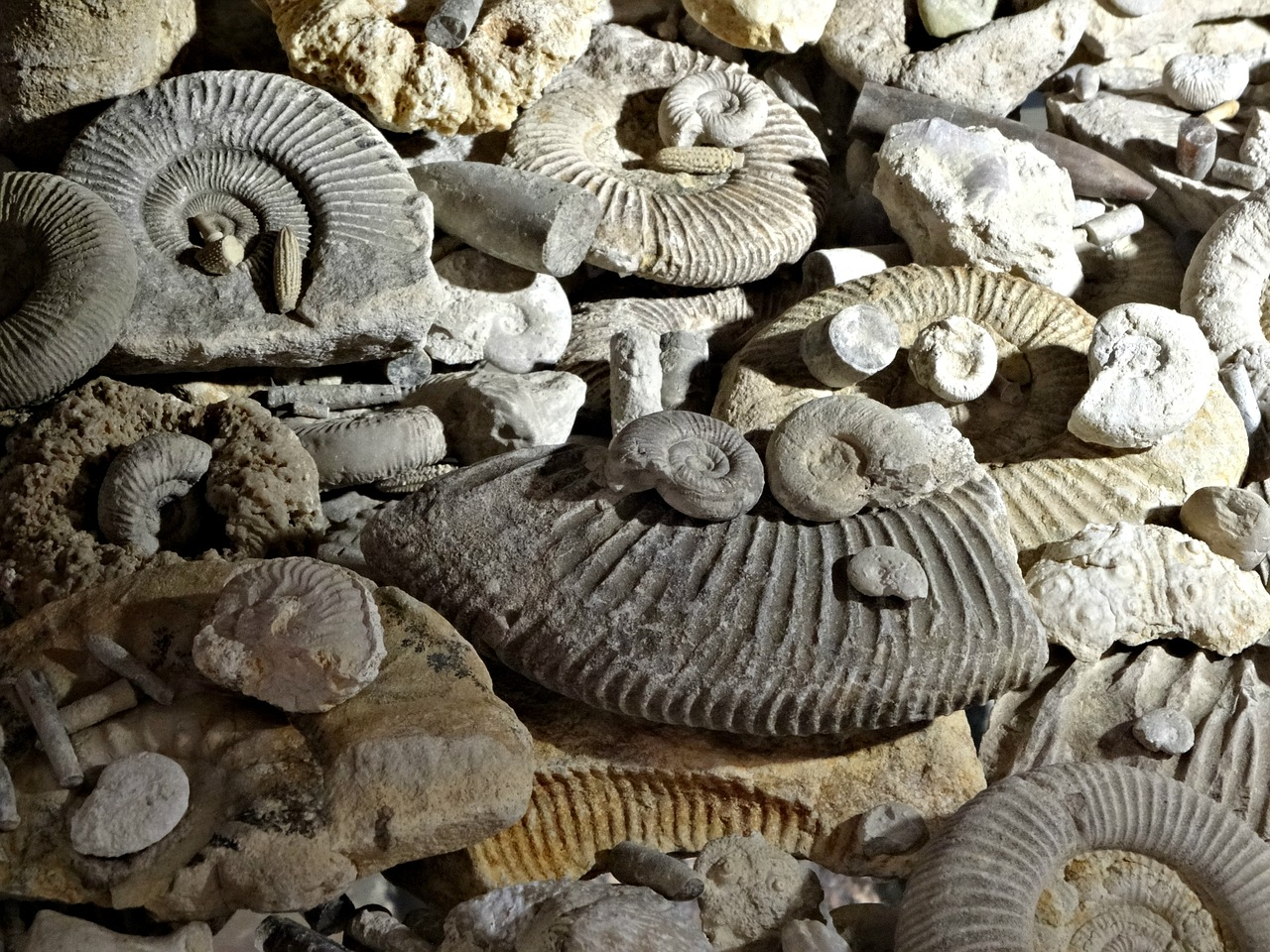 five places for a fossil hunting adventure dorset cereals