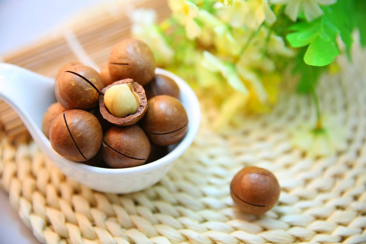 10 reasons why the macadamia is the world's most interesting nut