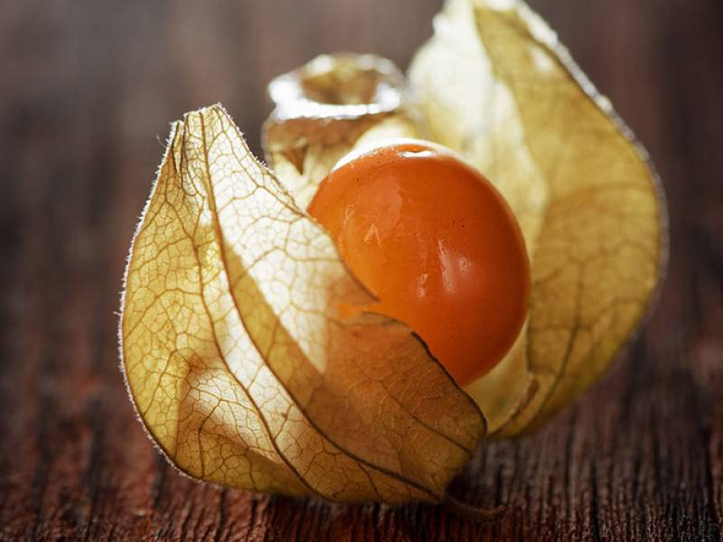 the golden berry: nine things you probably didn't know about this delicious little fruit