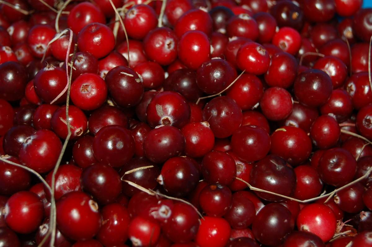 how to make a cranberry