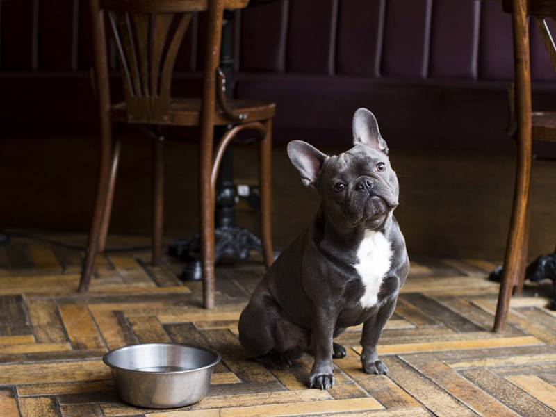 the 'ruff guide' to pub walks with dogs